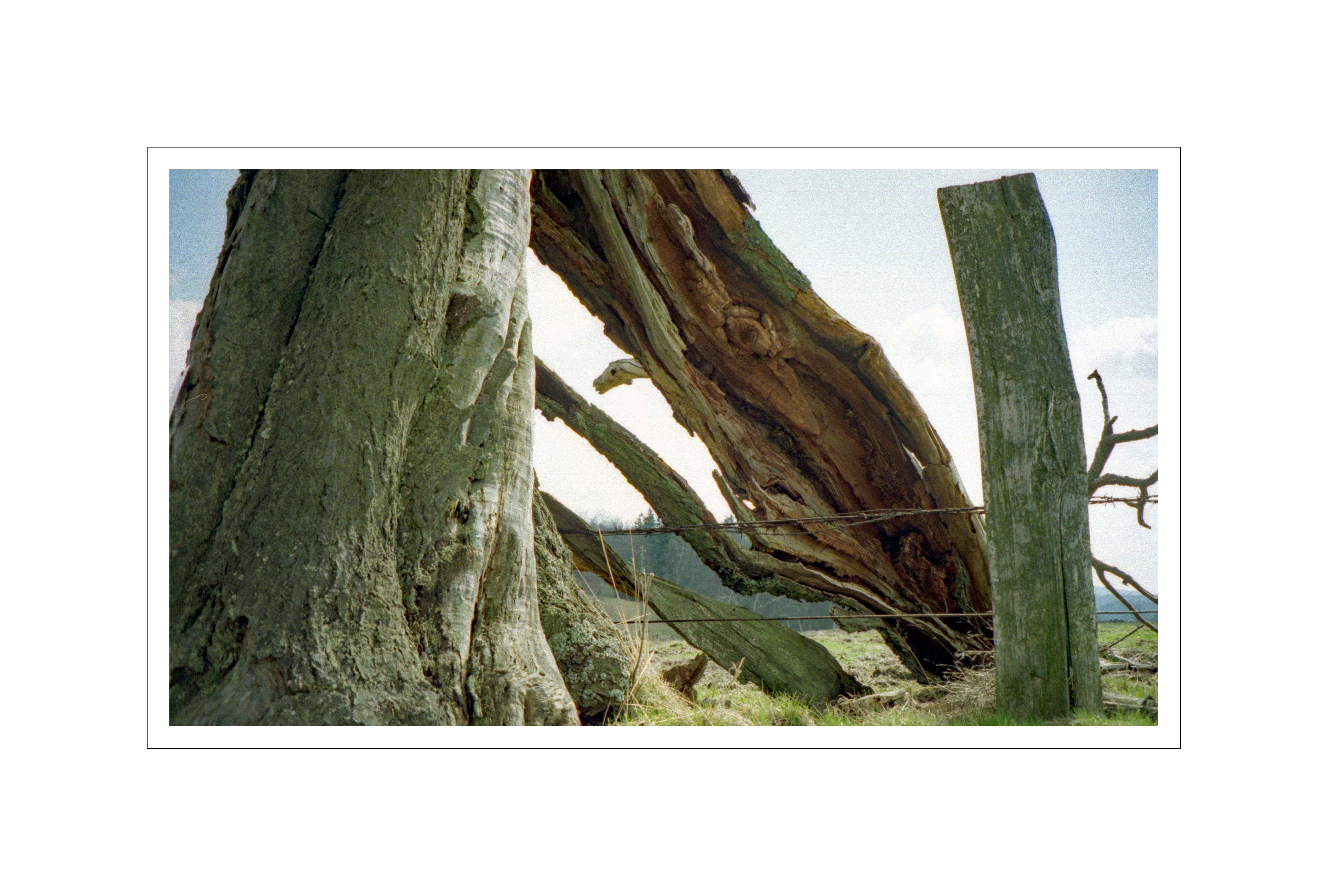 (Natur / C. J., 2002)